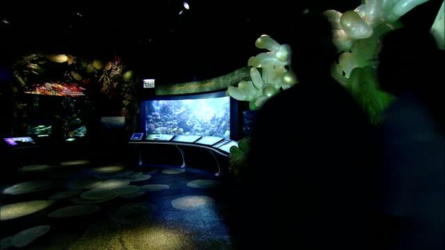 vídeos de stock e filmes b-roll de a couple walks through a colorful aquarium exhibit. - aquário john g shedd