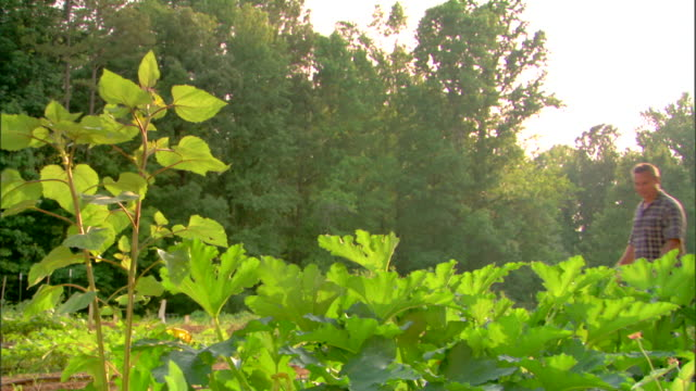 couple wandering through garden - see other clips from this shoot 1425 stock videos and b-roll footage