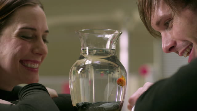 cu pan couple watching gold fish swimming in vase, appleton, wisconsin, usa - aquarium stock videos & royalty-free footage