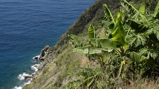 cove of chichiriviche de la costa. - 熱帯の低木点の映像素材/bロール