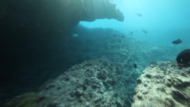 stockvideo's en b-roll-footage met cove of fish 2 - franse overzeese gebieden