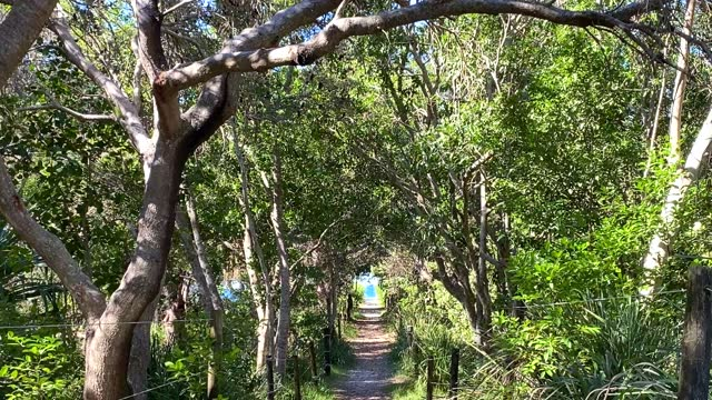 covered beach bush walkway track to ocean - non urban scene stock videos & royalty-free footage