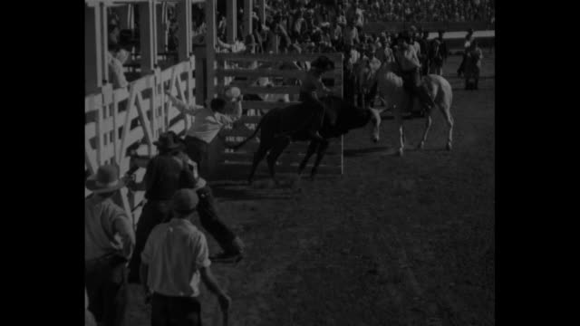 covered wagons pulled by horses move along track in stadium, crowd in stands watching / shot of back of head of moving steer from person riding steer... - bucking stock videos & royalty-free footage