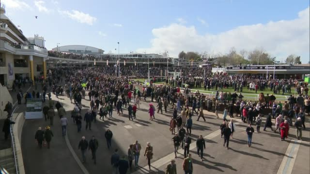 government 'delay' strategy criticised; england: cheltenham racecourse: ext crowds at stands and paddock area - on day of cheltenham gold cup - cheltenham stock videos & royalty-free footage