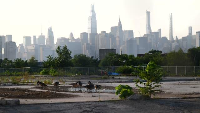 vídeos y material grabado en eventos de stock de covid-19 pandemic. brooklyn, nyc. greenpoint-williamsburg streets. daily life. - terrenos a construir
