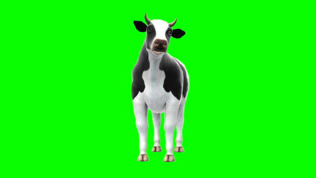 cow chewing green screen (loopable) - green matte stock videos & royalty-free footage