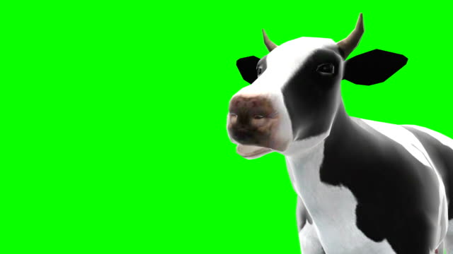 Cow Chewing Green Screen (Loopable)