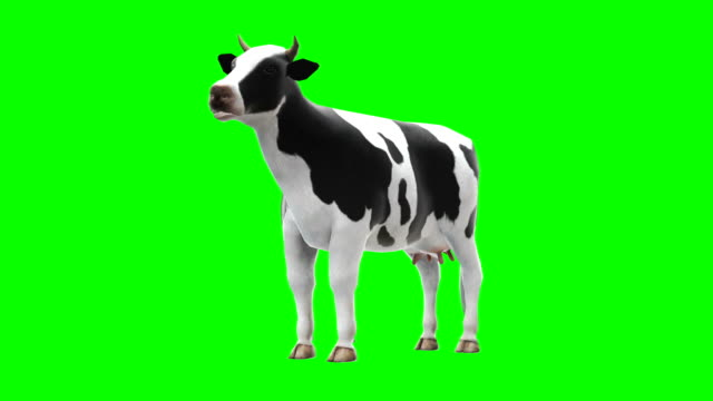 cow chewing green screen (loopable) - green background stock videos & royalty-free footage