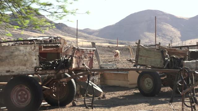 stockvideo's en b-roll-footage met ms cow eating in dirt with trailers / darmaland (fonteine village), kunene, namibia - wiese