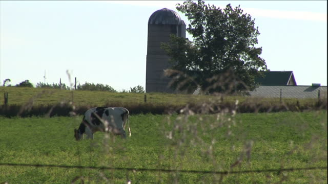 a cow grazes in a field near a silo. - barbed wire stock videos & royalty-free footage