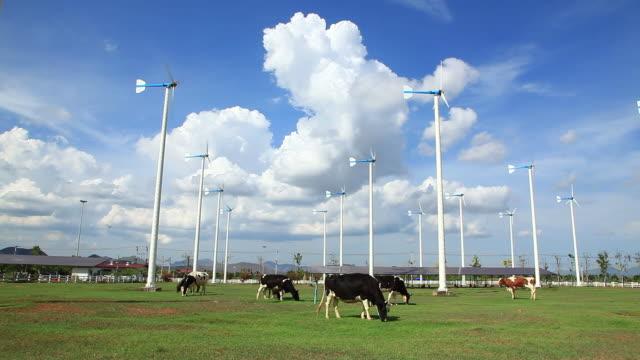 vidéos et rushes de vache brouter avec turbine farm - animaux domestiques
