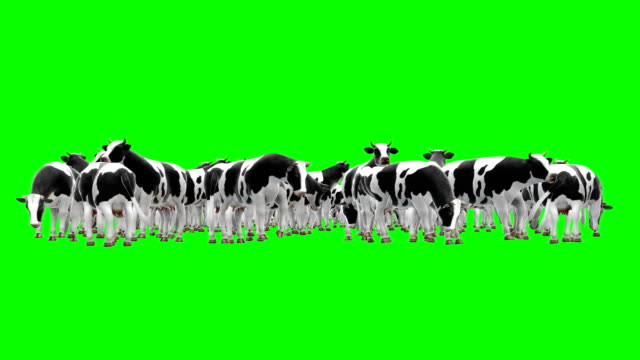 cow herd green screen (loopable) - green background stock videos & royalty-free footage