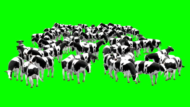 Cow Herd Green Screen (Loopable)
