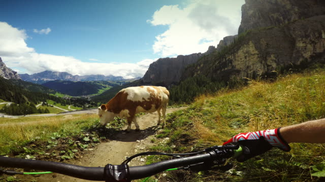 cow on my way! - mountain bike stock videos & royalty-free footage