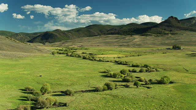 cow standing apart from herd in colorado - drone shot - gunnison stock videos & royalty-free footage