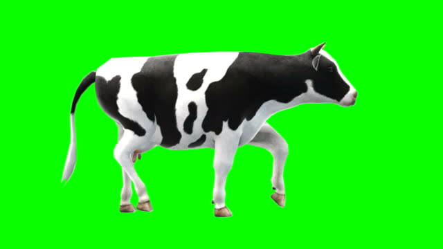 cow walking green screen (loopable) - green color stock videos & royalty-free footage