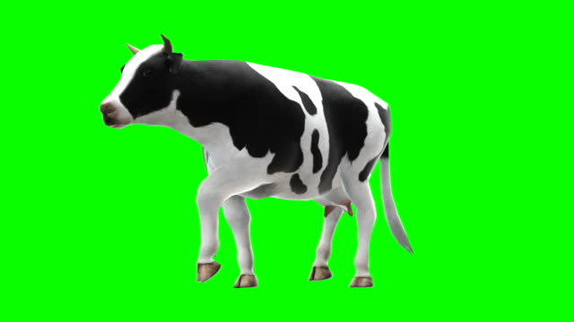 cow walking green screen (loopable) - green matte stock videos & royalty-free footage