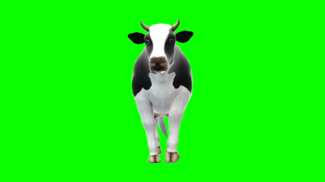 Cow Walking Green Screen (Loopable)