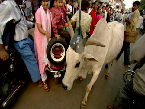 Cow walks past spectators at parade Goa