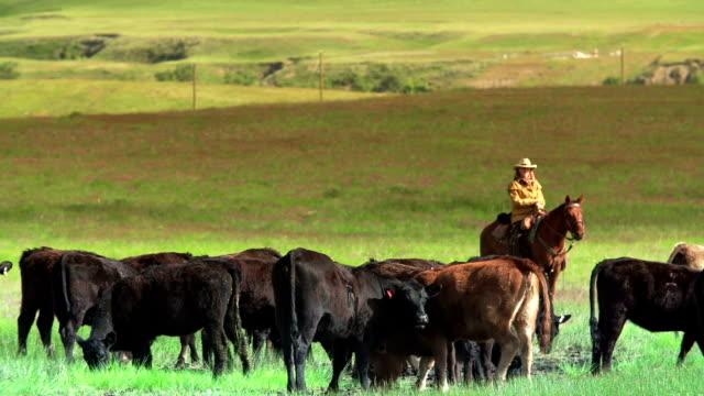 Cowboy e una Cowgirl Mandria di bovini da gaucho nomadi percorrono le praterie