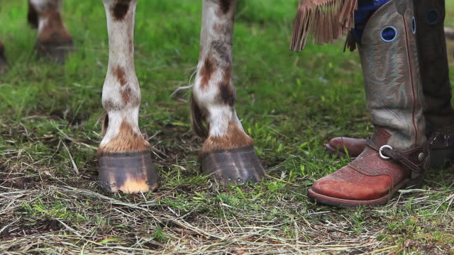 cowboy boots, spurs, chaps and horse hooves - appaloosa stock videos and b-roll footage