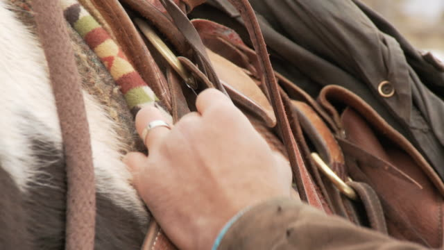 cu cowboy buckling up a western saddle on a horse / shell, wyoming, united states - herbivorous stock videos & royalty-free footage