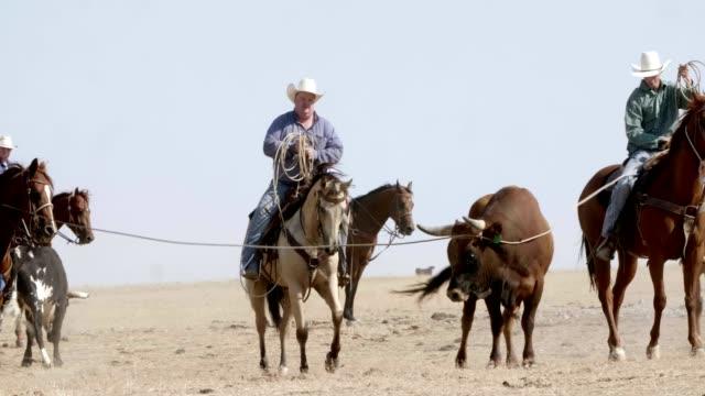 Cowboy Bull Roundup