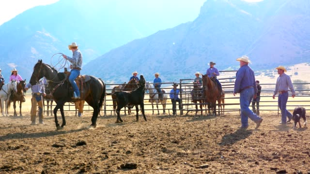 cowboy bull roundup - rodeo stock videos & royalty-free footage