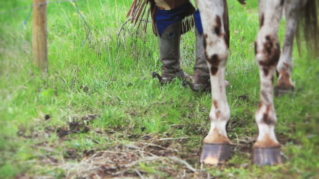 cowboy cleaning horses hooves - appaloosa stock videos and b-roll footage