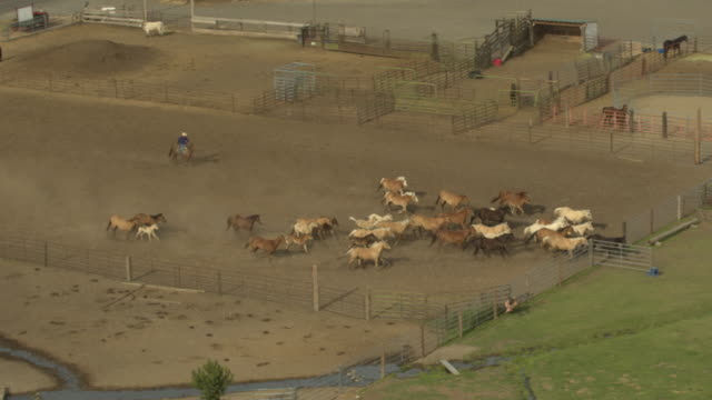 Cowboy driving a herd of horses to a meadow
