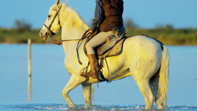 vídeos y material grabado en eventos de stock de cowboy female camargue bull wild horse rider water - oficio agrícola
