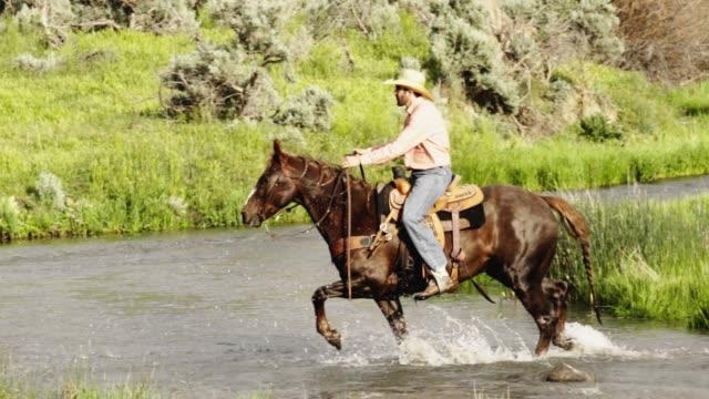 stockvideo's en b-roll-footage met een stream fordes a cowboy te paard - prairie