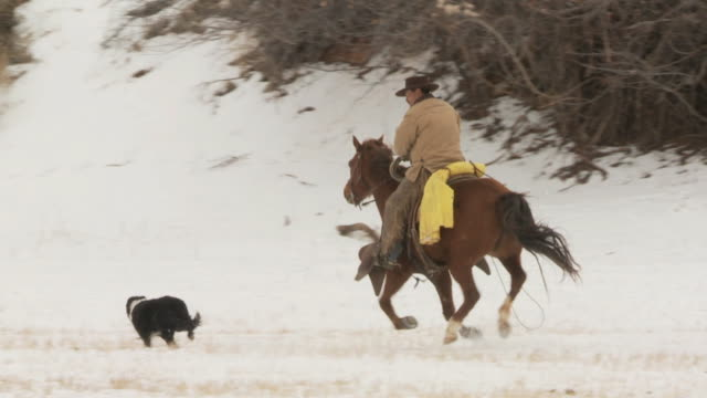 slo mo ws pan cowboy galloping in snowy landscape / shell, wyoming, usa - wyoming ranch stock videos & royalty-free footage