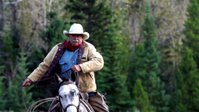 cowboy galloping on horseback - all horse riding stock videos and b-roll footage