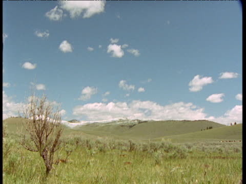 cowboy gallops past on horseback over prairie, montana - galopp gangart von tieren stock-videos und b-roll-filmmaterial