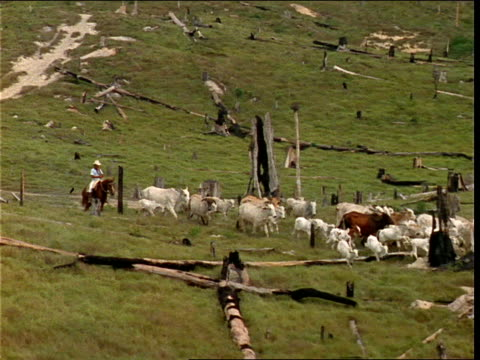 a cowboy herds his cattle across a clear-cut area near a brazilian forest. - ranch stock videos & royalty-free footage