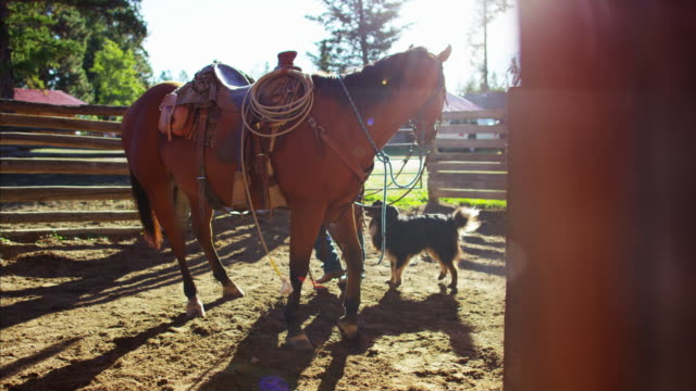 cowboy in corral with horse wild west usa - bridle stock videos & royalty-free footage