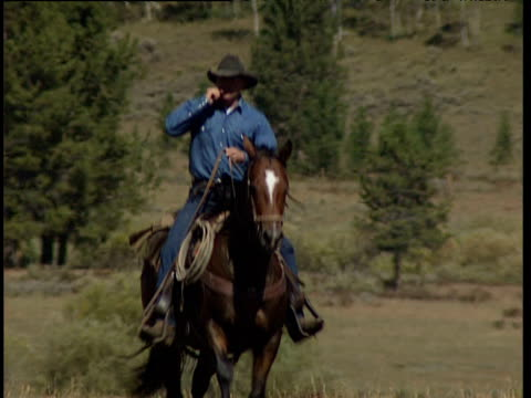 stockvideo's en b-roll-footage met cowboy in stetson wearing denim shirt and jeans rides horse through field towards camera. trees on mountainside in background colorado - jeans