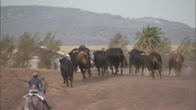 a cowboy on horseback follows running bulls toward a barn on a ranch in tarifa, spain. - bull animal stock videos & royalty-free footage