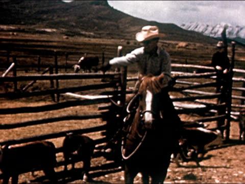 vídeos de stock, filmes e b-roll de 1950 cowboy on horseback lassoing calf in corral / gunnison, colorado / audio - gunnison