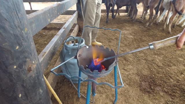 POV Cowboy preparing branding iron at fire