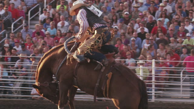 cowboy rides a bucking bronco and is thrown at a rodeo - shot in slow motion. - 1 minute or greater stock videos & royalty-free footage
