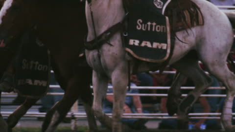 cowboy rides a bucking bronco at a rodeo, brought to a stop by mounted assistants - shot in slow motion. - rodeo stock videos & royalty-free footage