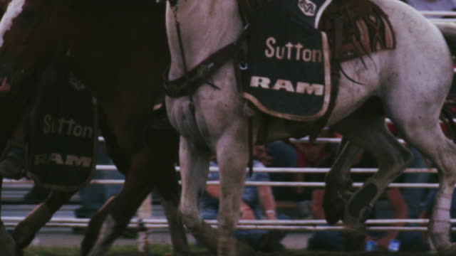 cowboy rides a bucking bronco at a rodeo, brought to a stop by mounted assistants - shot in slow motion. - 1 minute or greater stock videos & royalty-free footage