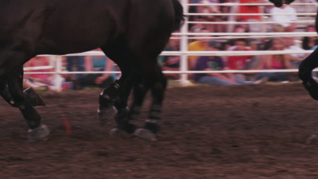vídeos de stock, filmes e b-roll de a cowboy rides a team of six black horses around a rodeo ring - slow motion. - animal de trabalho