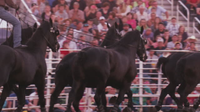 A cowboy rides a team of six black horses around a rodeo ring - slow motion.
