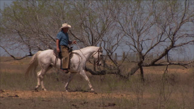 a cowboy rides a white horse past trees in dallas. - cowboy hat stock videos & royalty-free footage