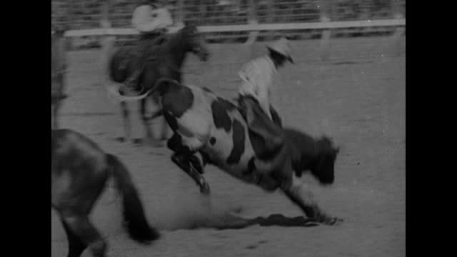cowboy rides bucking bronco, bronco falls / crowd in stands watching / two shots of cowboys riding steers / boy in crowd watching / cowboy riding,... - cowboy hat stock videos & royalty-free footage