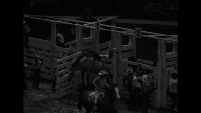 ms cowboy rides bucking bronco / tilt down cowboy parade in arena / vs cowboys ride bucking broncos and brahma bulls one cowboy gets trampled by bull... - bocksprång bildbanksvideor och videomaterial från bakom kulisserna