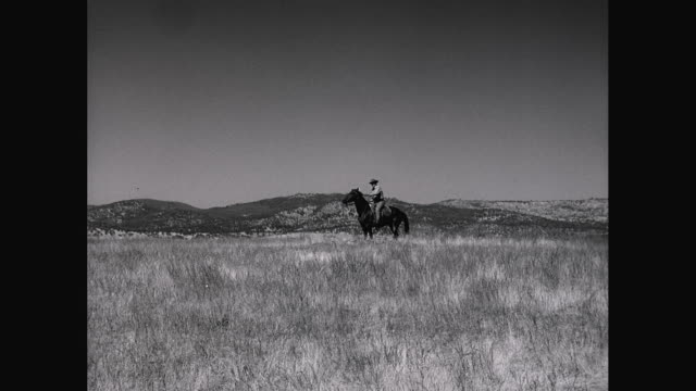 ws pan cowboy riding horse in field / united states - on the move video stock e b–roll